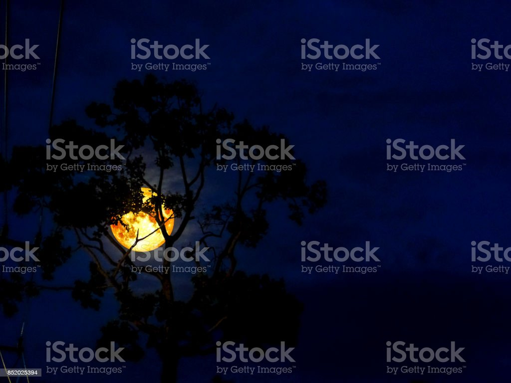 moon light and silhouette tree in the night, Elements of this image...