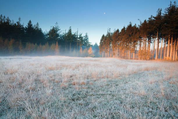 maan over Frosted bos weide in mist in de winter foto