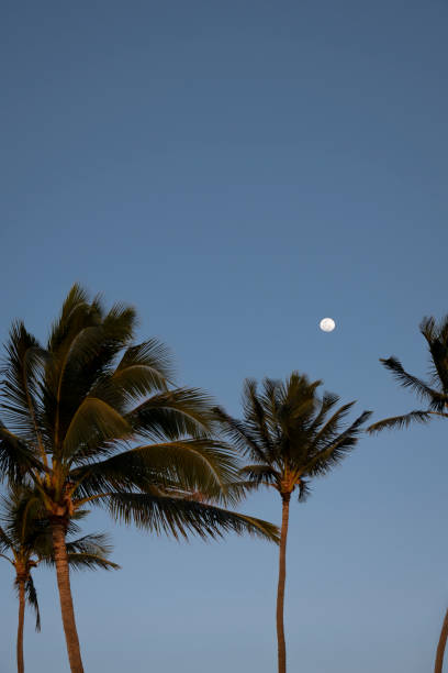 Moon over Palm Trees stock photo