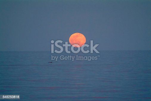 Lone pelican and a full moon rising over the Sea of Cortez. Baja California Sur, Mexico.