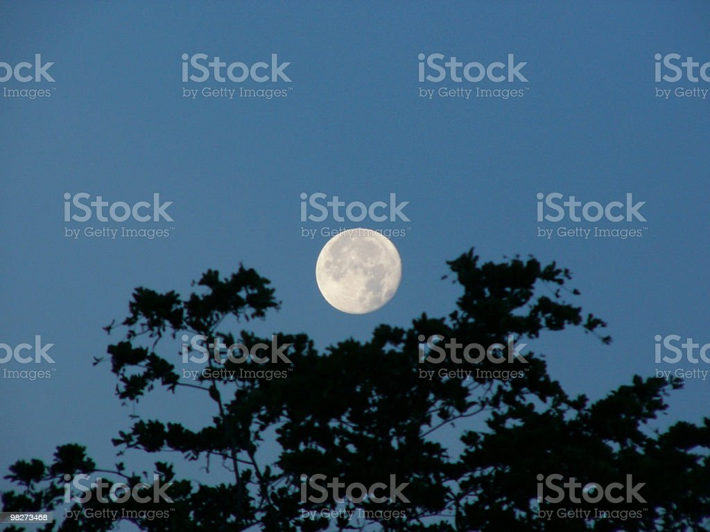 Moon over tree royalty-free stock photo