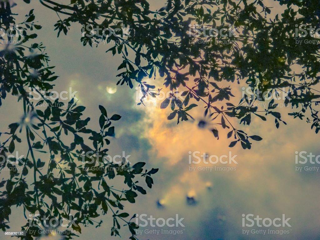 Maan van reflectie Pudlle - Royalty-free Blad Stockfoto