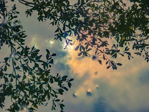 Maan Van Reflectie Pudlle Stockfoto en meer beelden van Blad