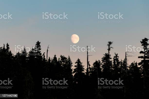 Photo of Moon Rising Over The Trees