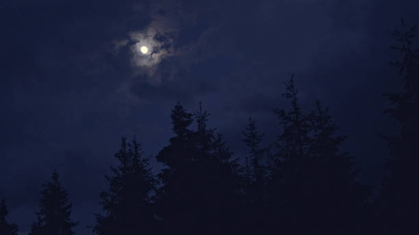Moon shining above spruce trees stock photo