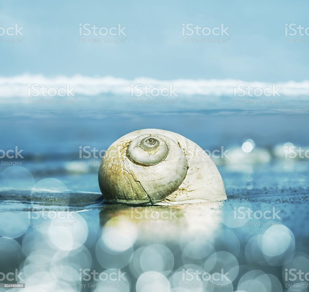 Moon Snail and Bokeh stock photo