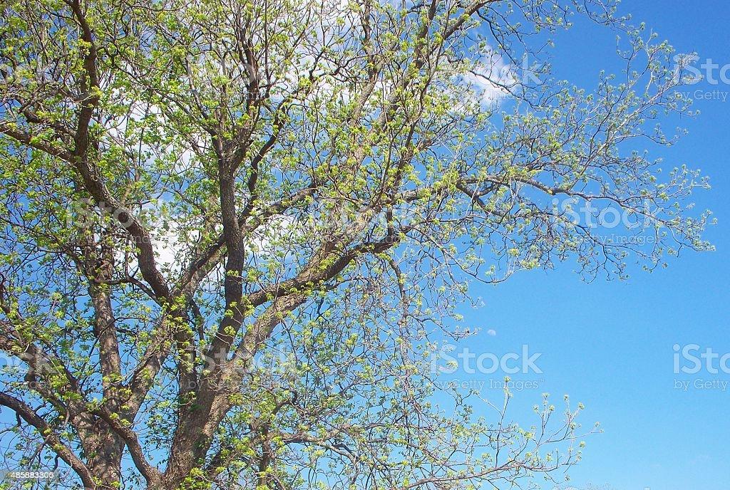 Moon Tree stock photo