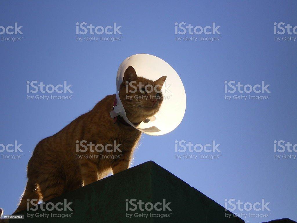 MoonCat stock photo