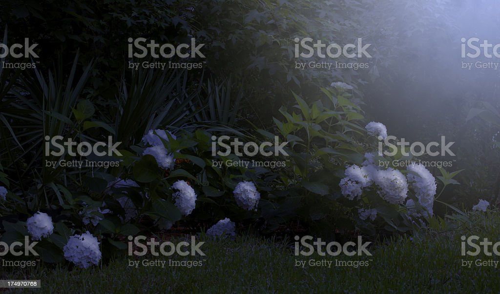 Moonlight on the Garden royalty-free stock photo