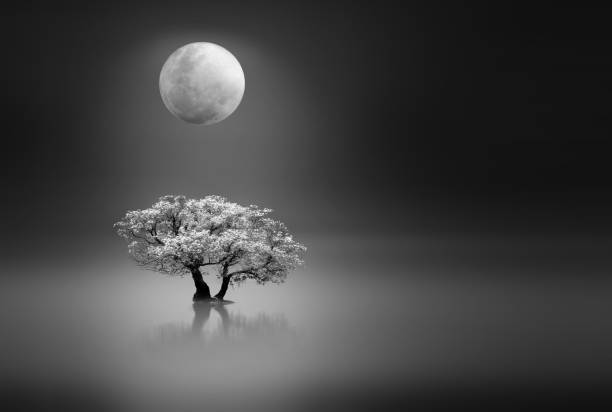 Moonlight over a lonely tree stock photo