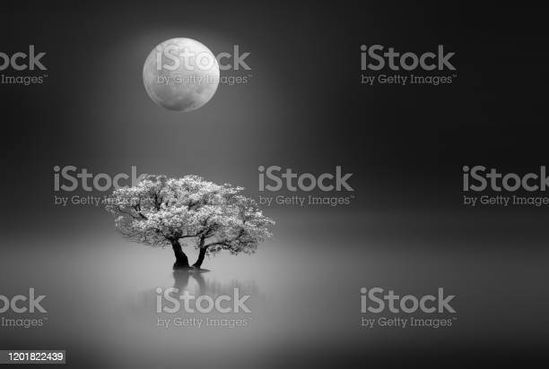 Photo of Moonlight over a lonely tree