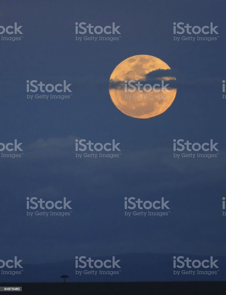 Moonlight over the Masai Mara royalty-free stock photo
