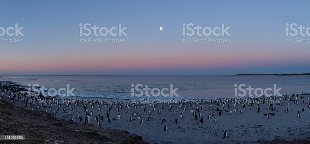 Moonrise over penguins stock photo