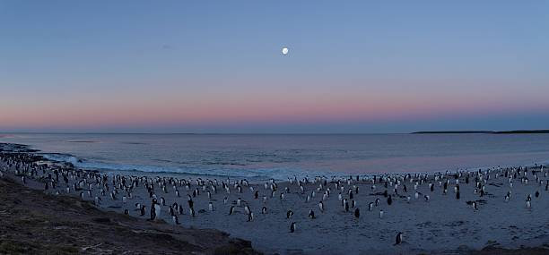 Moonrise over penguins stock photo