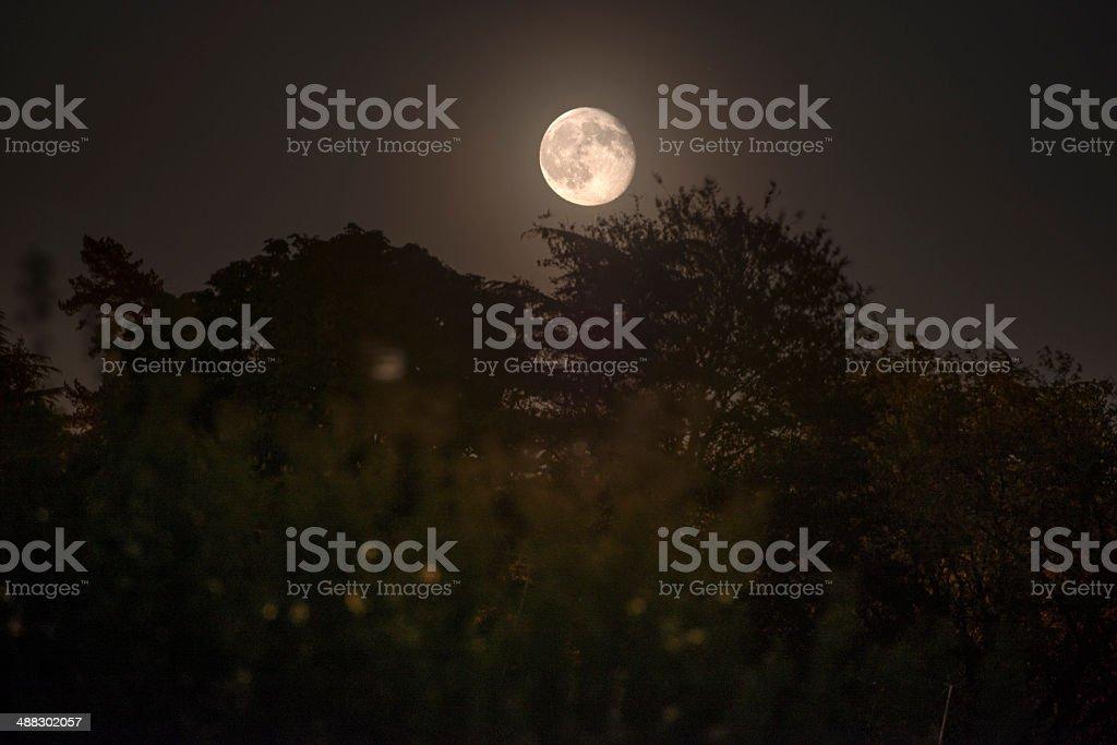 Moonrise over the treeline stock photo