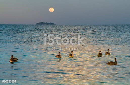Pelicans under a full moon in the Caribbean Sea.