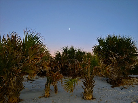moonrise with palm trees
