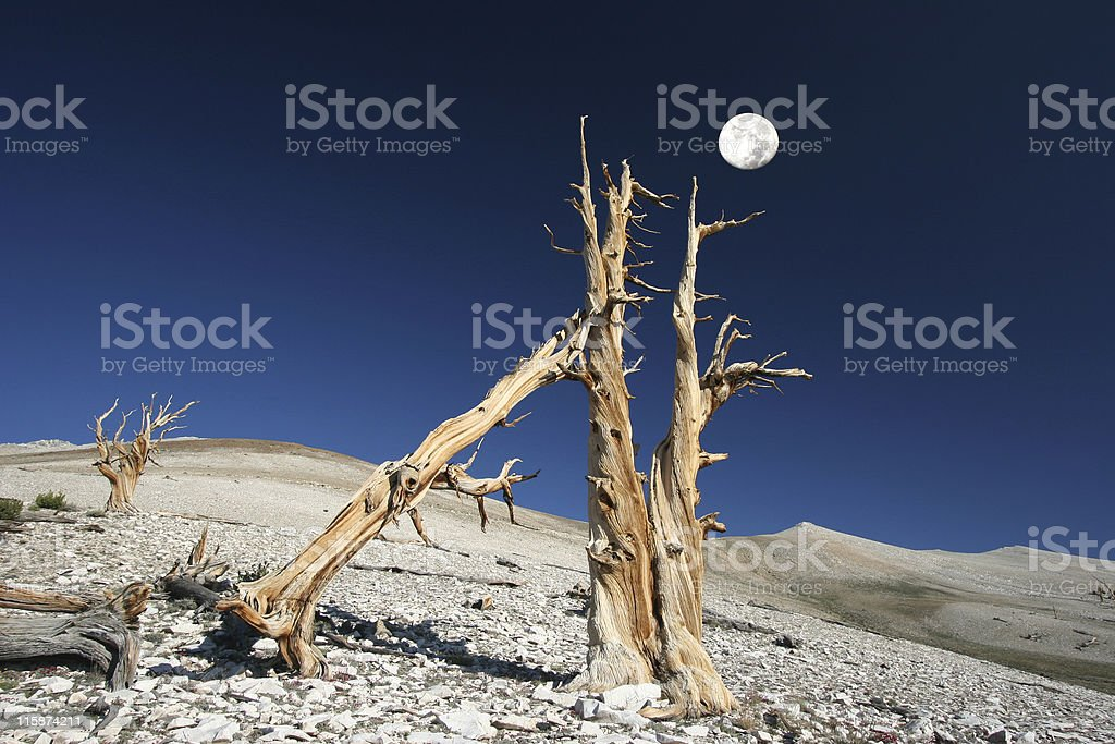 Moonscape royalty-free stock photo