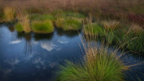 Moor im Hohen Venn in Belgien und Deutschland – Foto