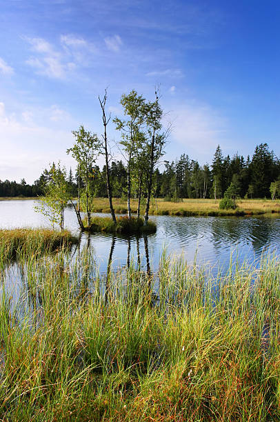moor lake stock photo