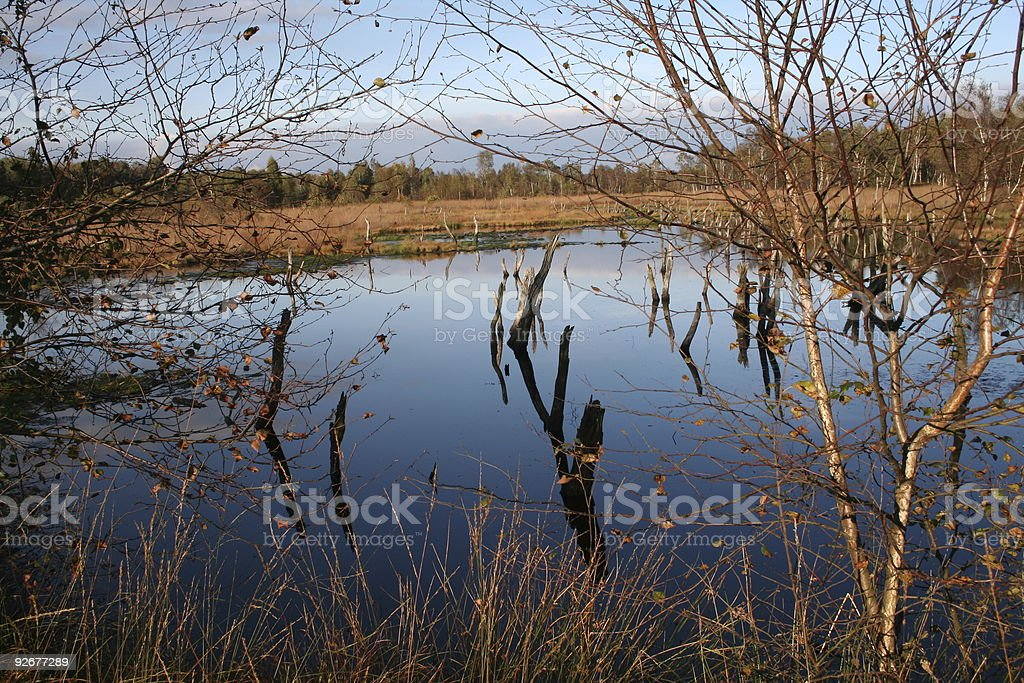 Moor landscape in autumn. royalty-free stock photo