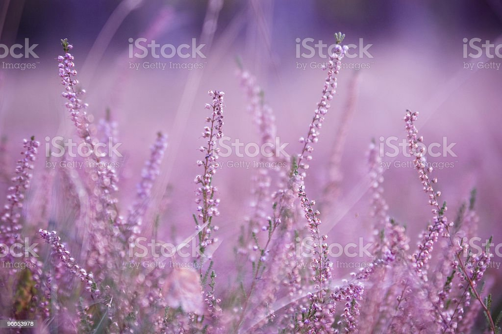 Moorland at the forest clearing. stock photo