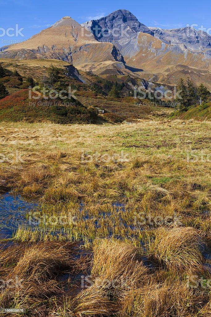 Moorlandschaft mit Schwarzhorn und Gemschiberg stock photo