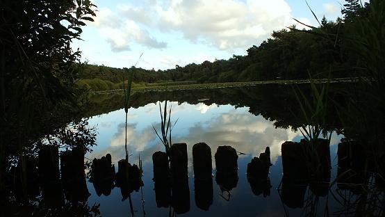 Moorsee Stockfoto und mehr Bilder von Deutschland