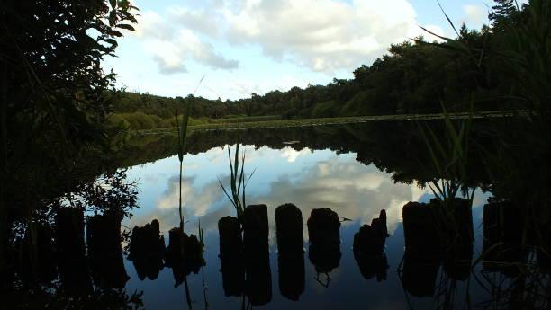 Moorsee – Foto