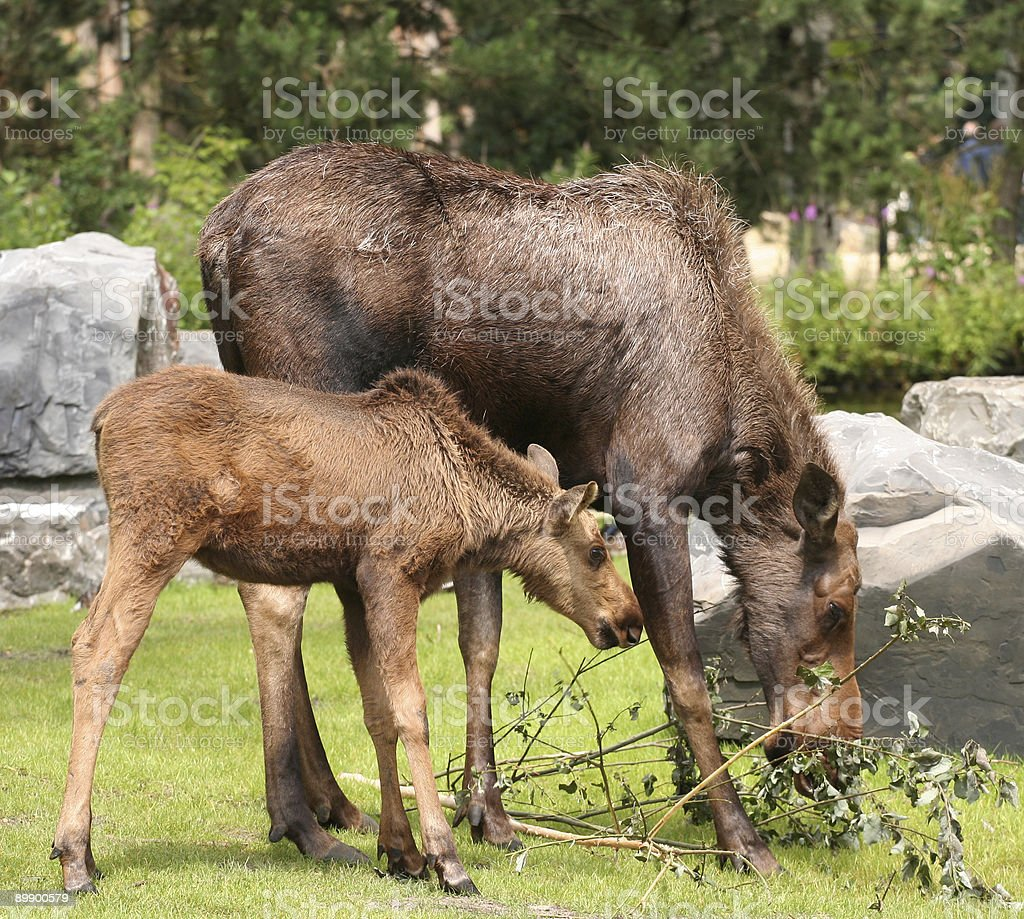 Moose und Kind Lizenzfreies stock-foto