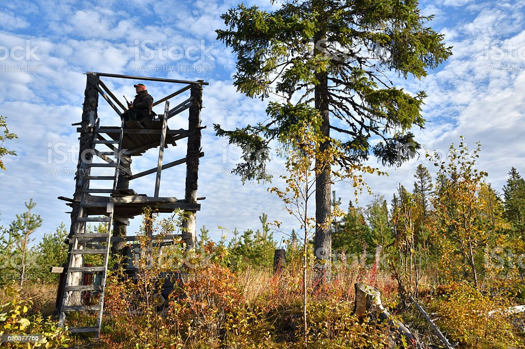 Moose hunter from left side sitting in a hunting tower zbiór zdjęć royalty-free
