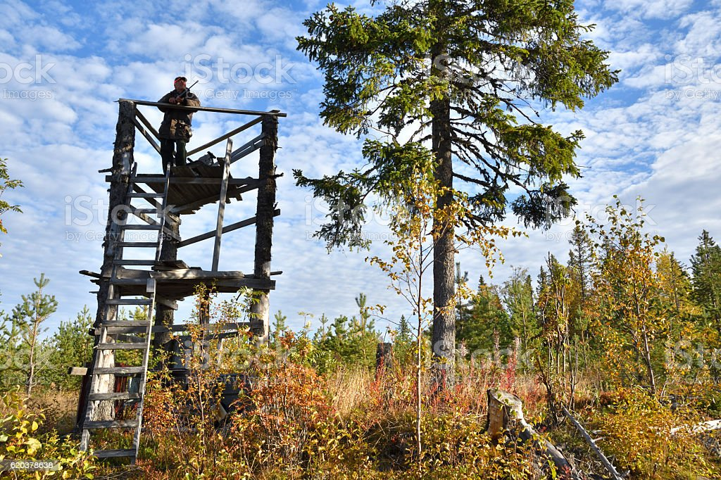 Moose hunter in a hunting tower holding his rifle foto de stock royalty-free