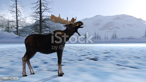 Moose on a Snowy landscape