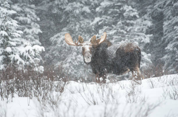 Lac Moose - Photo