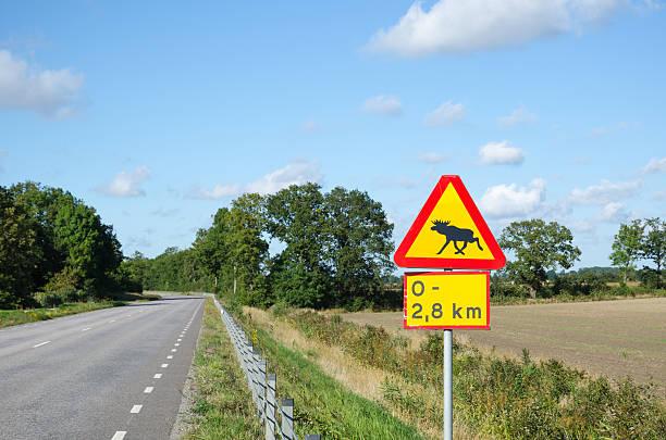 moose warning roadsign - älg sverige bildbanksfoton och bilder