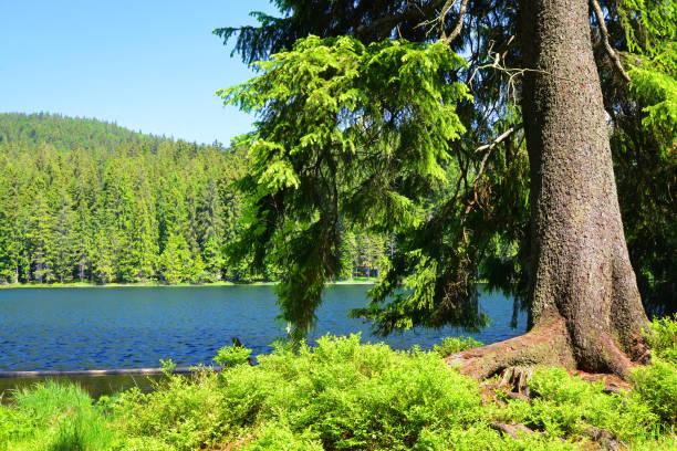 moraine lake grosser arbersee, tyskland. - bayerischer wald bildbanksfoton och bilder