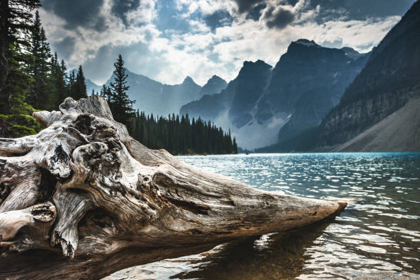 Moraine Lake in Banff Moraine Lake in Banff moraine lake stock pictures, royalty-free photos & images