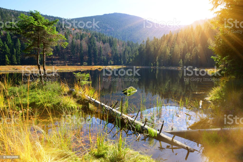 Moraine lake Kleiner Arbersee in National park Bavarian forest. Germany. stock photo