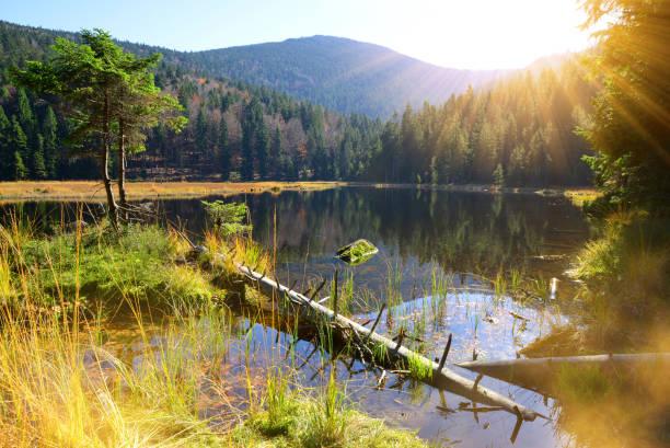 moraine lake kleiner arbersee i nationalparken bayersk skog. tyskland. - bayerischer wald bildbanksfoton och bilder