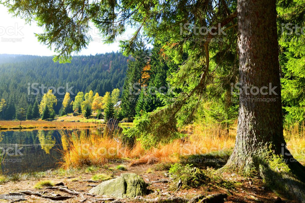 Moraine lake Kleiner Arbersee in National park Bavarian forest. stock photo