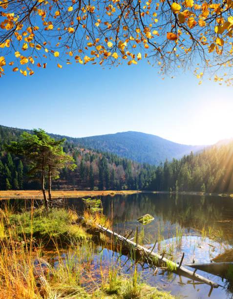 moraine lake kleiner arbersee i nationalparken bayersk skog. - bayerischer wald bildbanksfoton och bilder