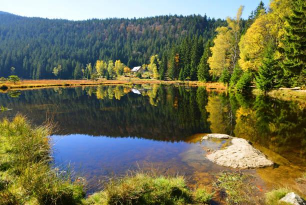 moraine lake kleiner arbersee i nationalparken bayersk skog, tyskland. - bayerischer wald bildbanksfoton och bilder