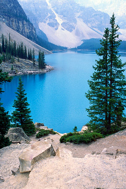 Moraine lake with trees and the mountain stock photo
