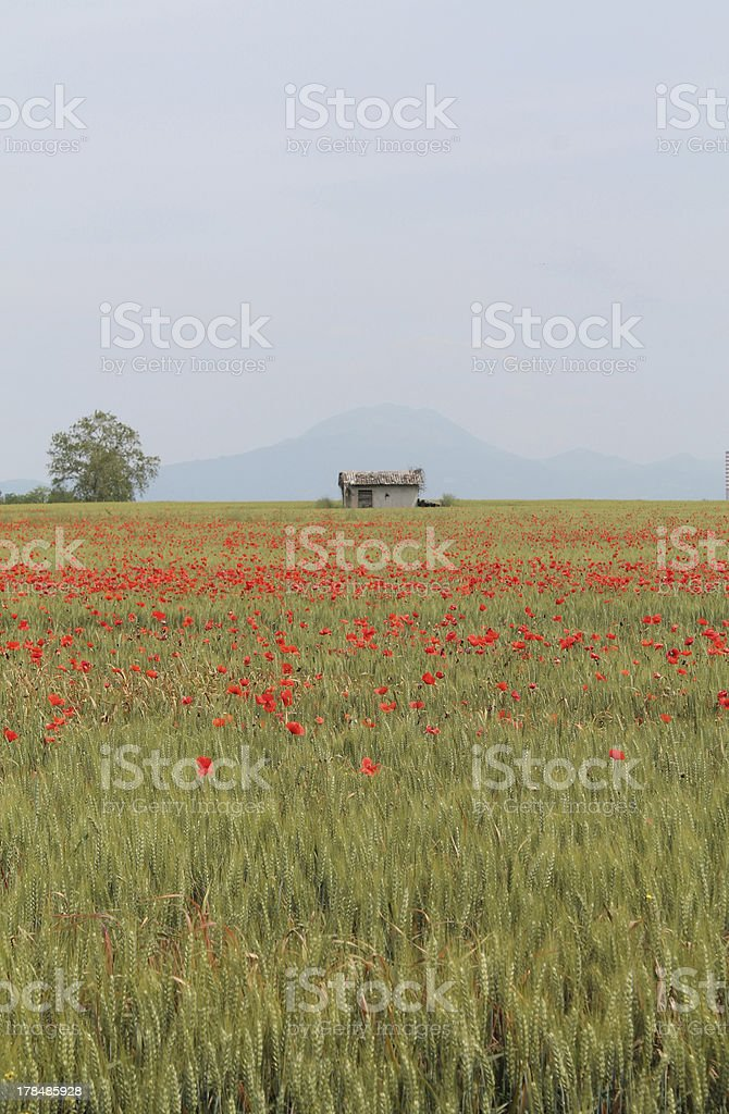 Morainic hills of Lake Garda stock photo