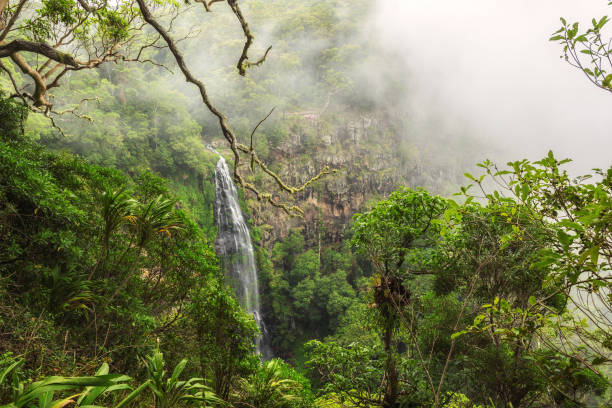 Morans falls on Morans Creek in Gondwana Rainforests, Queensland, Australia stock photo