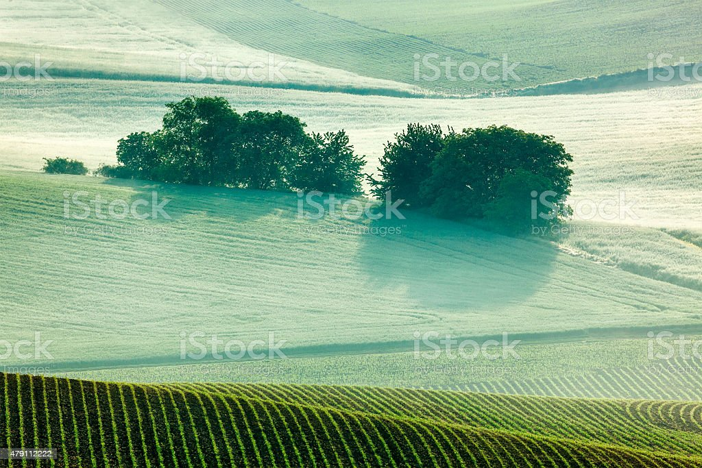 Moravian rolling fields in morning mist stock photo