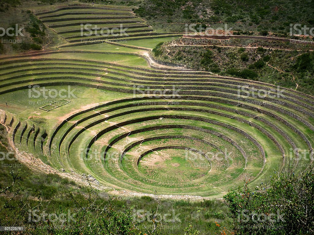 Moray stock photo