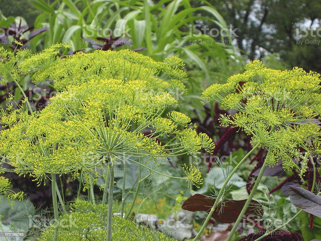 more vegetable garden colour royalty-free stock photo