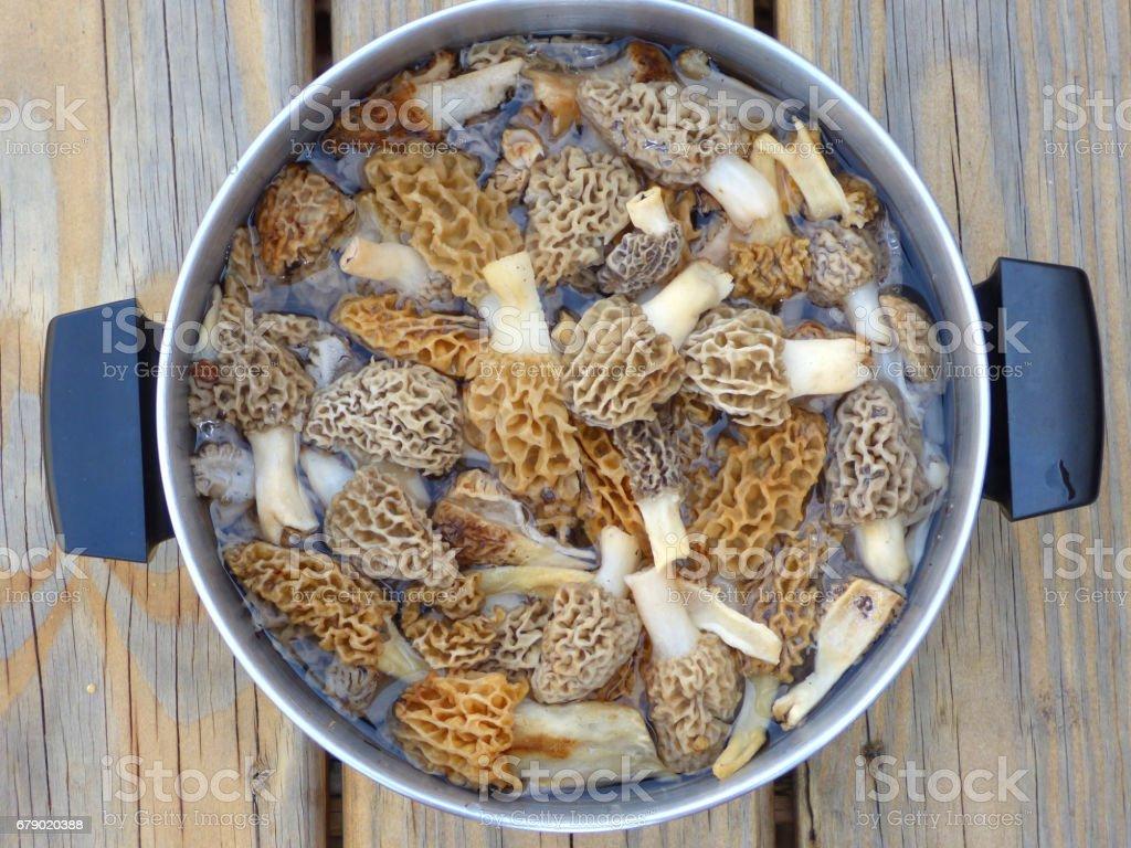 Morel Mushrooms Soaking in Cooking Pot photo libre de droits