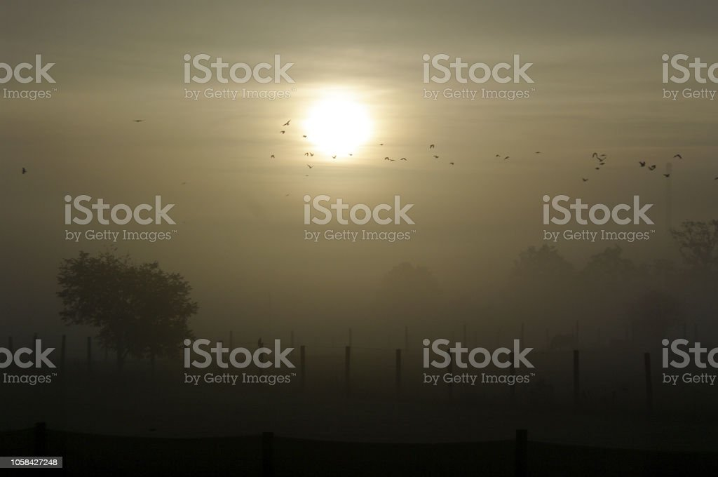 Morgennebel stock photo